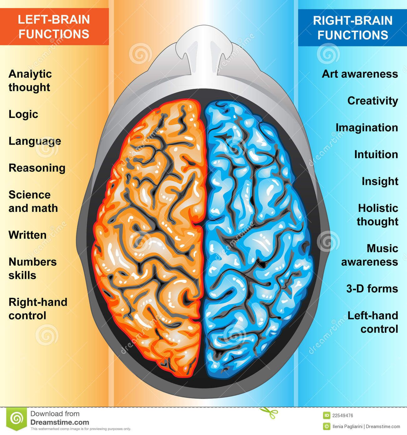 Left And Right Hemispheres Of The Brain Functions Google Search