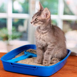 How To Get Rid Of Smell In Cat Litter Best Cat Litter