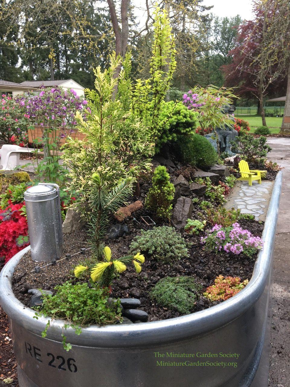 Miniature Garden Therapy Mission Spark Joy Garden Dream Garden