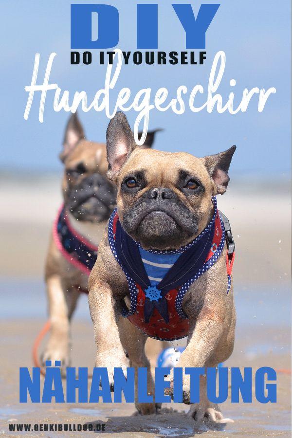 Anleitung Softgeschirr Fur Hunde Selbst Nahen Mit Bildern Hundegeschirr Softgeschirr Hunde