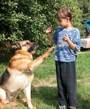 Doggone Safe suggestions for safe ways to love your dog that the dog will appreciate.