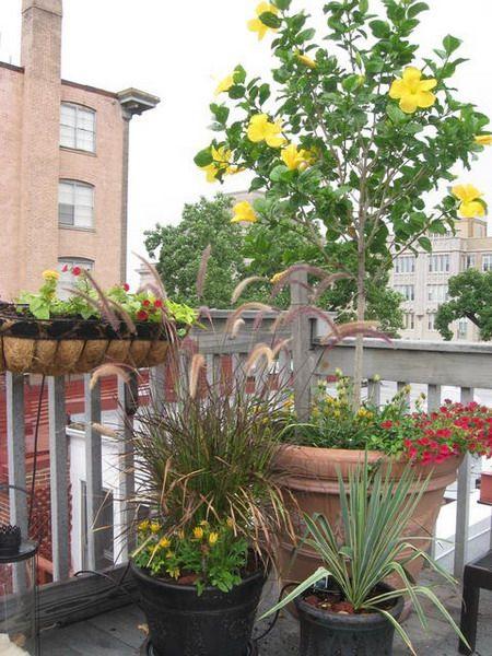 Лето на балконе. 75 фото - Ярмарка Мастеров - ручная работа, handmade