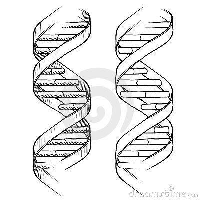 Dna Double Helix Drawing By Lhfgraphics Via Dreamstime
