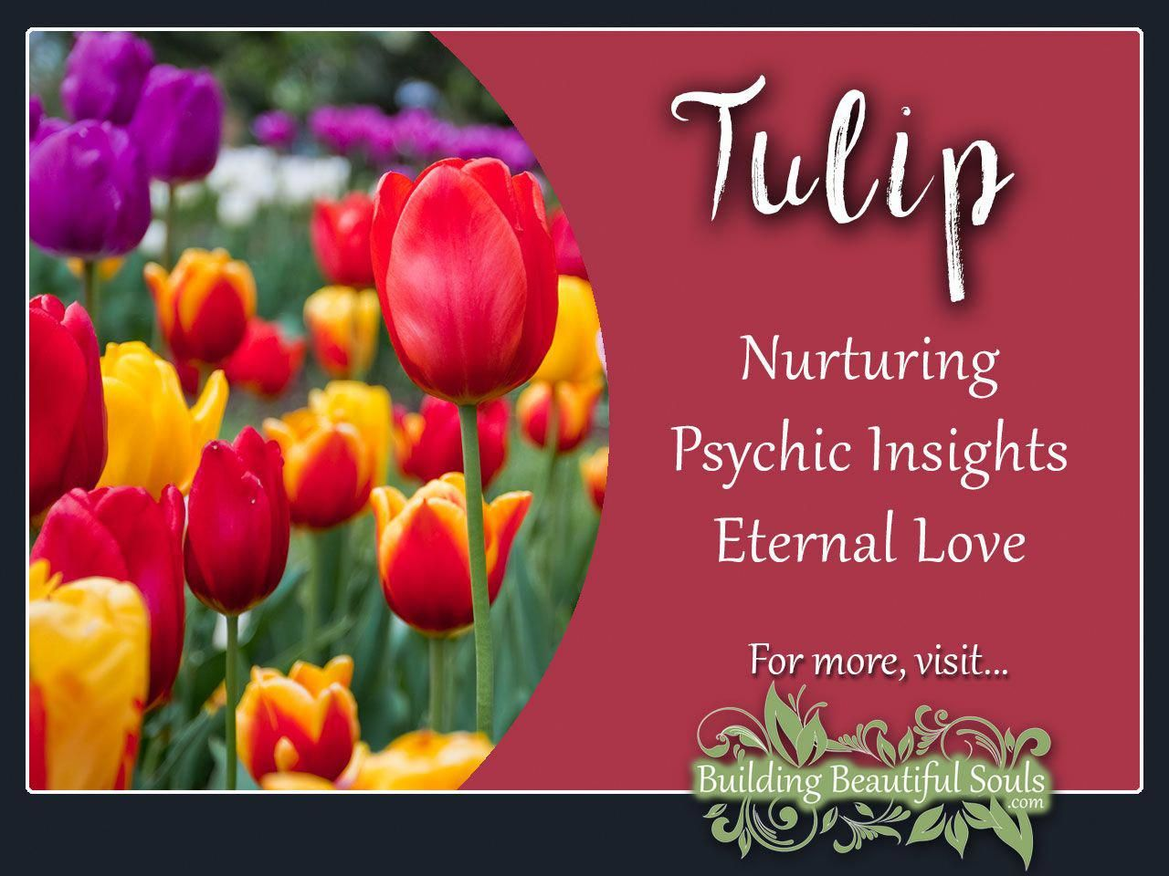 Tulip is a powerful flower delve deeply into tulip meaning