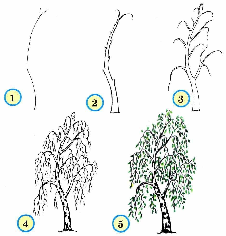 Рисование деревьев поэтапно