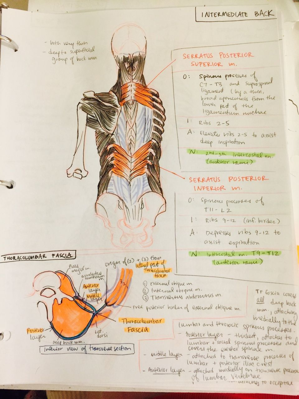ambitions like ribbons   Anatomia   Pinterest   Apuntes, Anatomía y ...