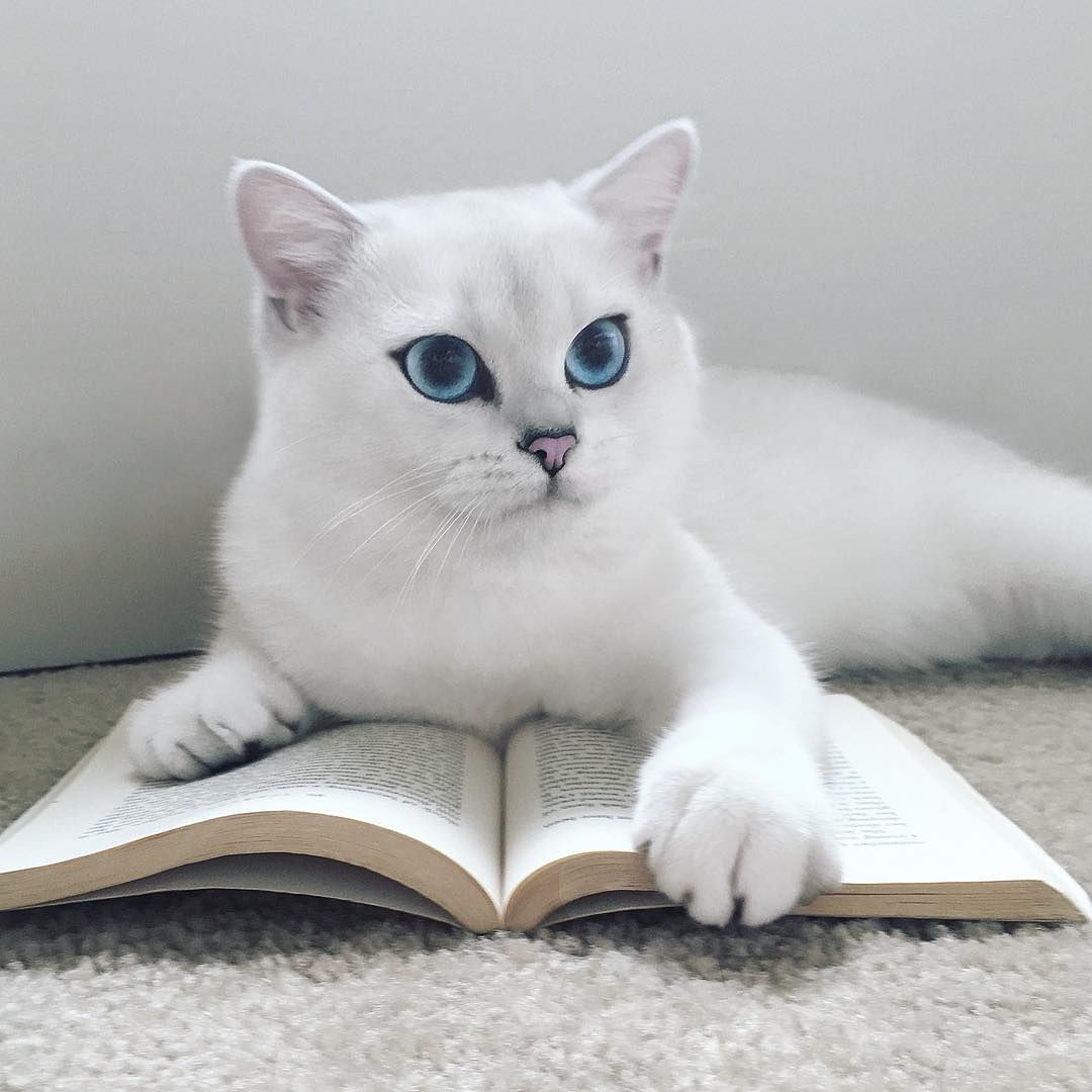 Coby the cat with the deep blue eyes is enchanting