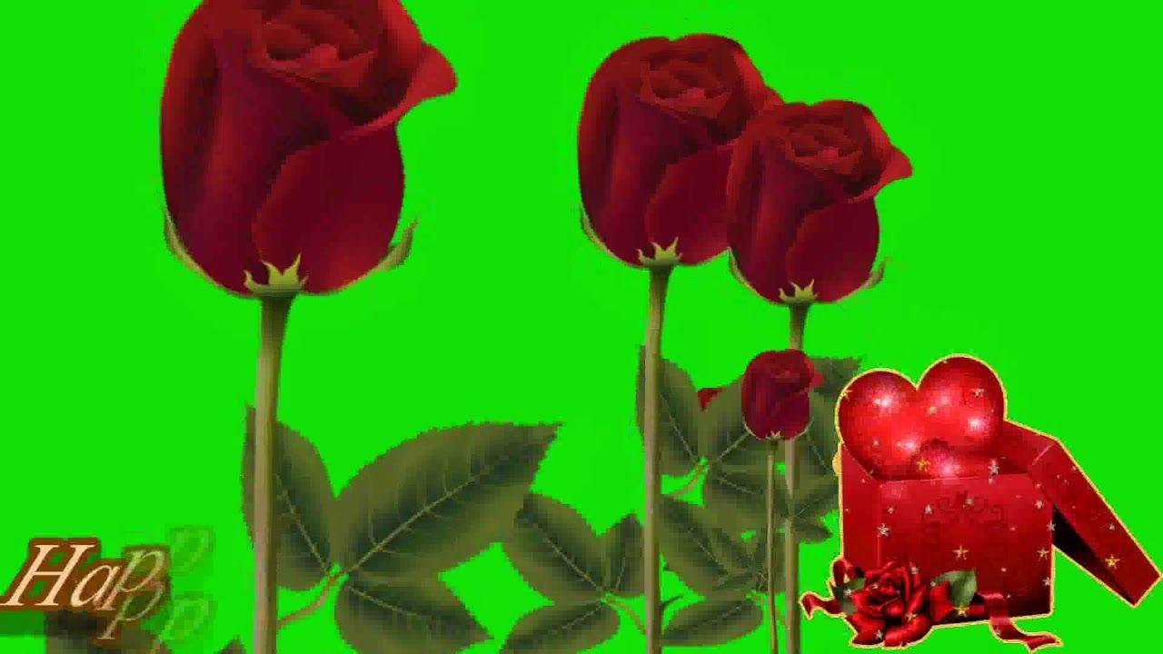 Rose Petals Falling Video Free Download Star Video Effect Rose Petals Falling Rose Petals Petals