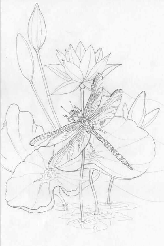 dragonfly sketches dragonfly drawing
