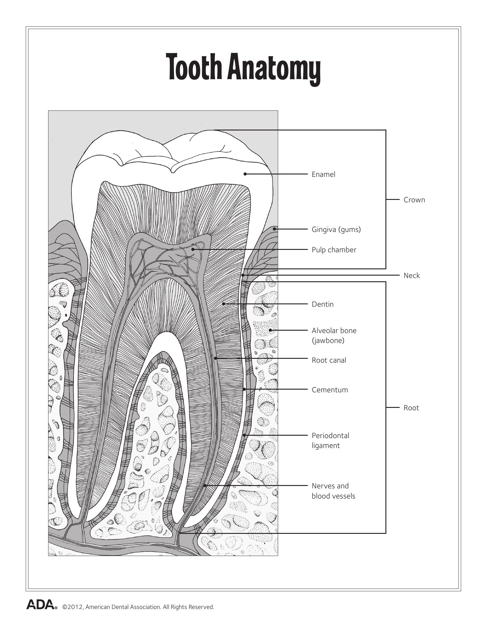 11 Dental Health Activity Sheets (Oral Health Made Easy) | Dental ...