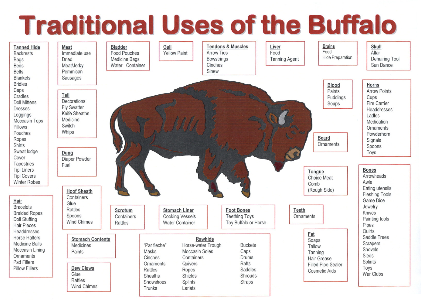 Do Native Americans Use All Parts Of The Buffalo Read