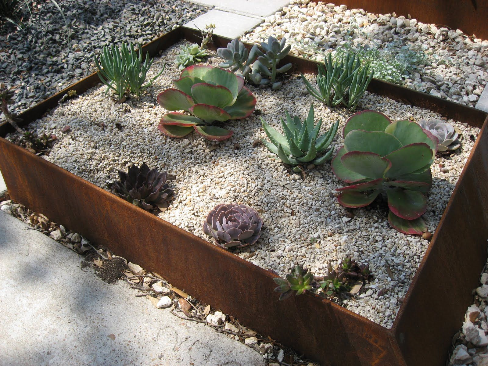 Succulents Metal Landscape Edging Metal Garden Edging Succulent Landscape Design