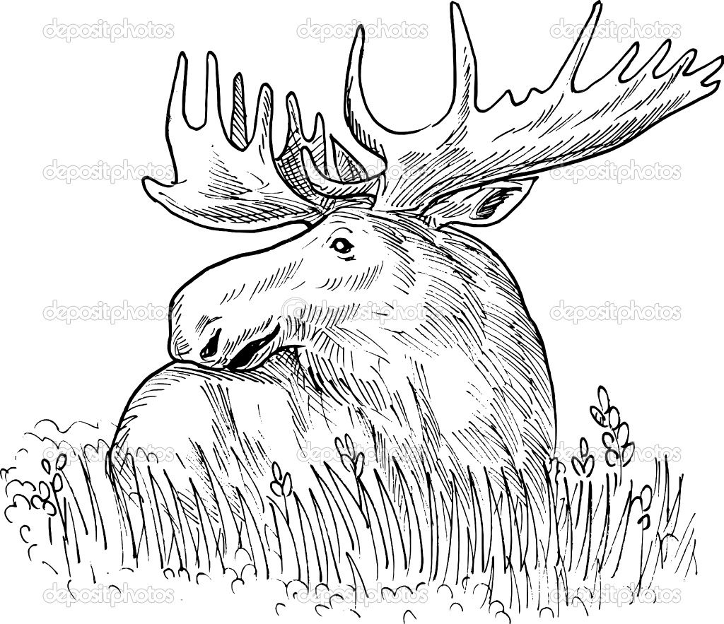 Free Coloring Pages Christmas Moose