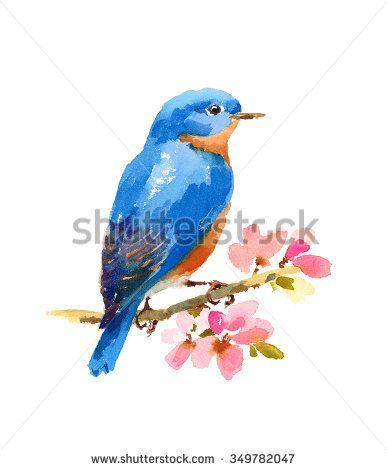 Watercolor Bluebird On Cherry Blossoms Branch Hand Painted