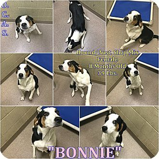Bonnie 1 8 Urgent Ohio County Animal Shelter In Triadelphia Wv Adopt Or Foster 8 Mo With Images Australian Shepherd Australian Shepherd Mix Puppies Pet Adoption