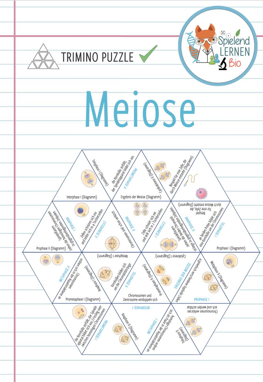 Meiose Trimino Unterrichtsmaterial Im Fach Biologie Unterrichtsmaterial Biologie Lernen [ 1320 x 910 Pixel ]