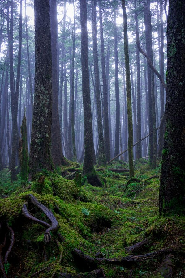 Forest of moss by Akihiro Shibata on 500px