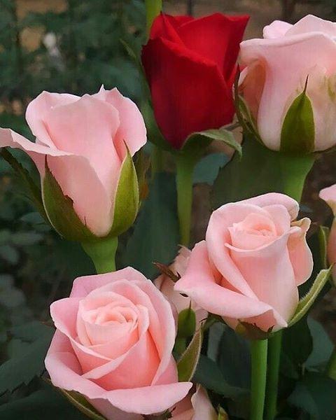 Pin On Blooms