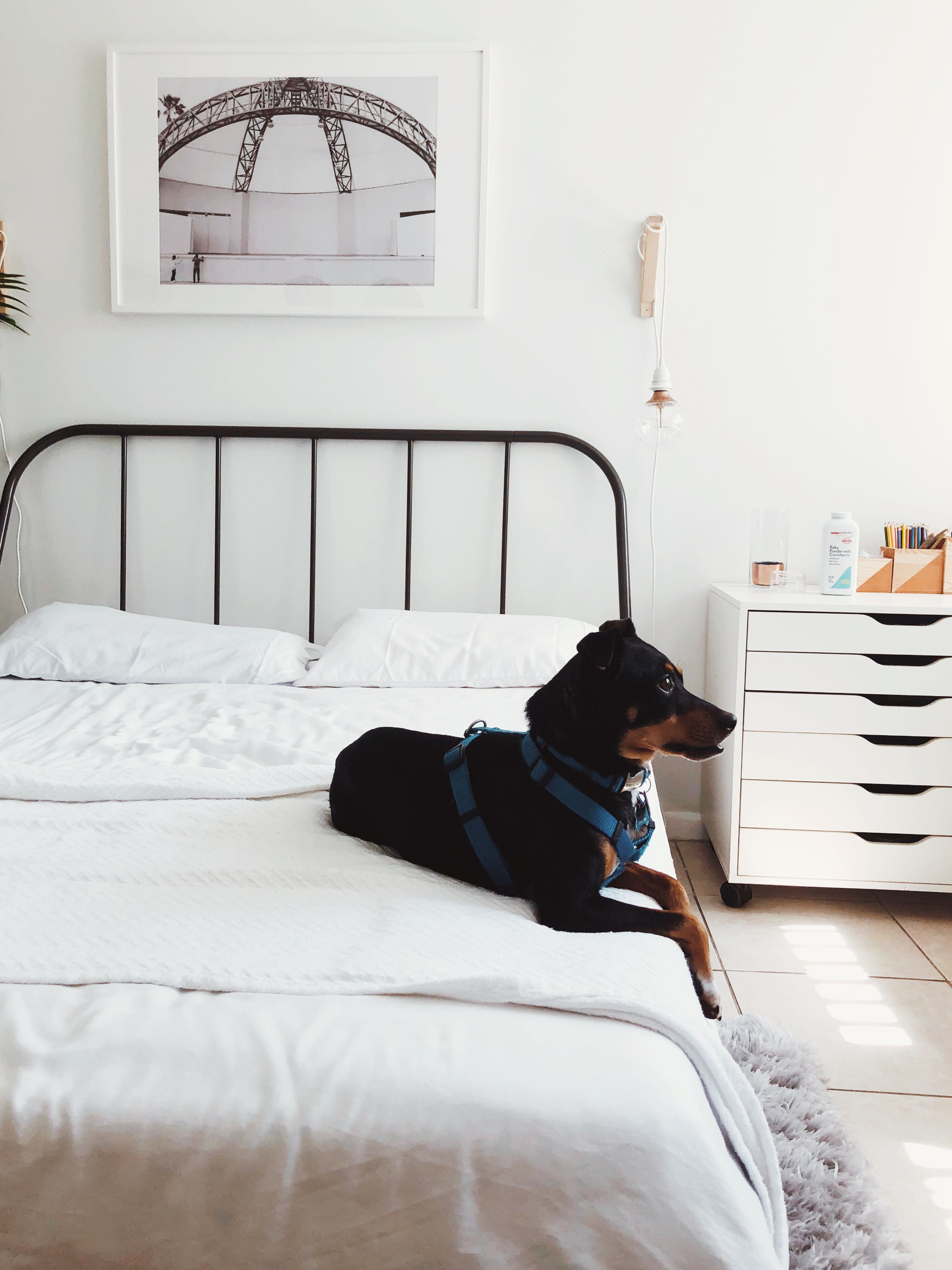 #bedroom #minimalistic #ikea #alex #doglovers | Sweet home ...