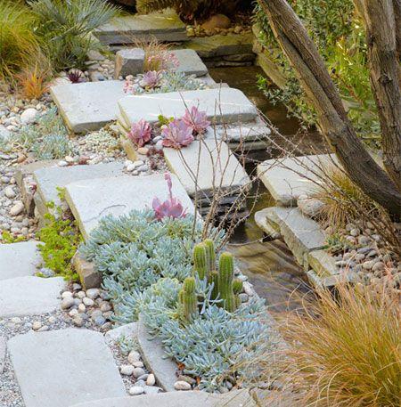 Desert garden with cacti and succulents - Texas garden - Arid landscape