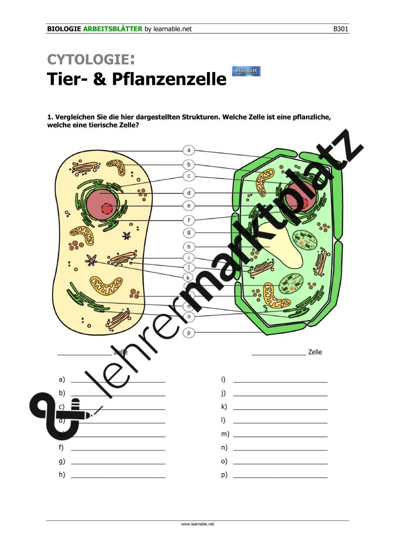 Cytologie: Tier- und Pflanzenzelle – Biologie | Biologie ...