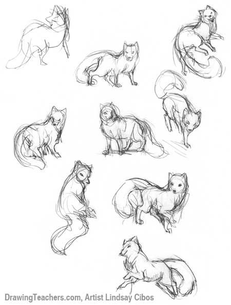 how to draw a cartoon fox step by step