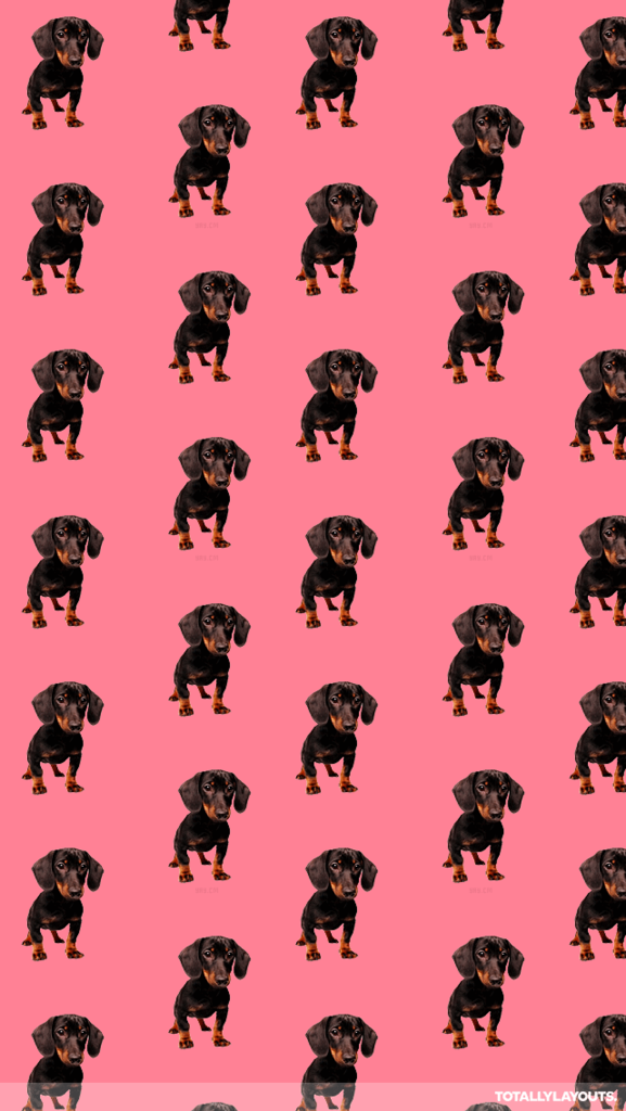 Dog Silhouette Wallpapers Group Dachshund wallpaper, Dog