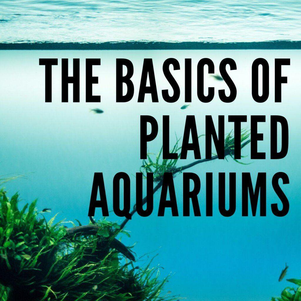 The Basics Of A Planted Aquarium In 2020 Planted Aquarium