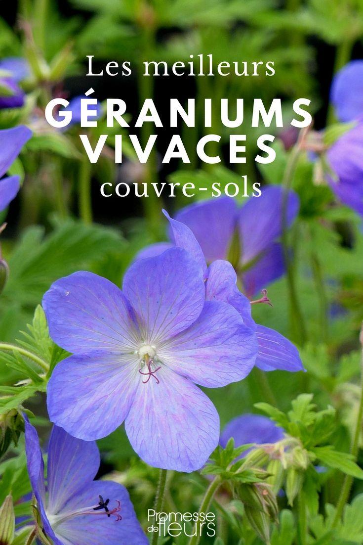 g raniums vivaces les meilleurs couvre sols conseils et astuces jardins geranium vivace. Black Bedroom Furniture Sets. Home Design Ideas