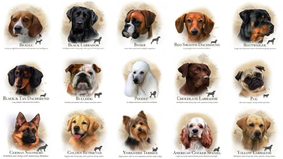 Do you ever wonder what kind of dog breed you'd be if you