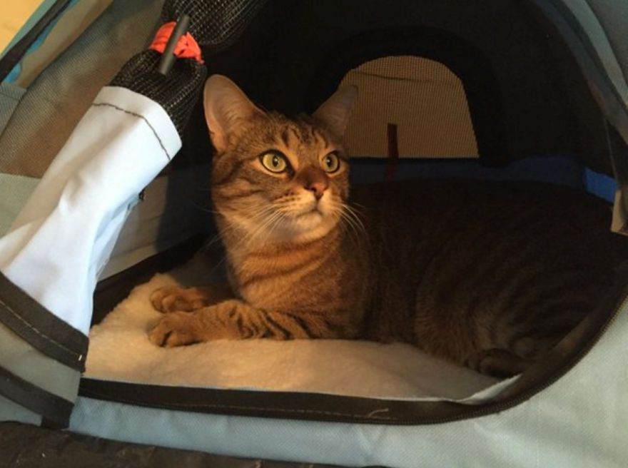 Cat & Tiny Tents For Cats! | Tents and Cat