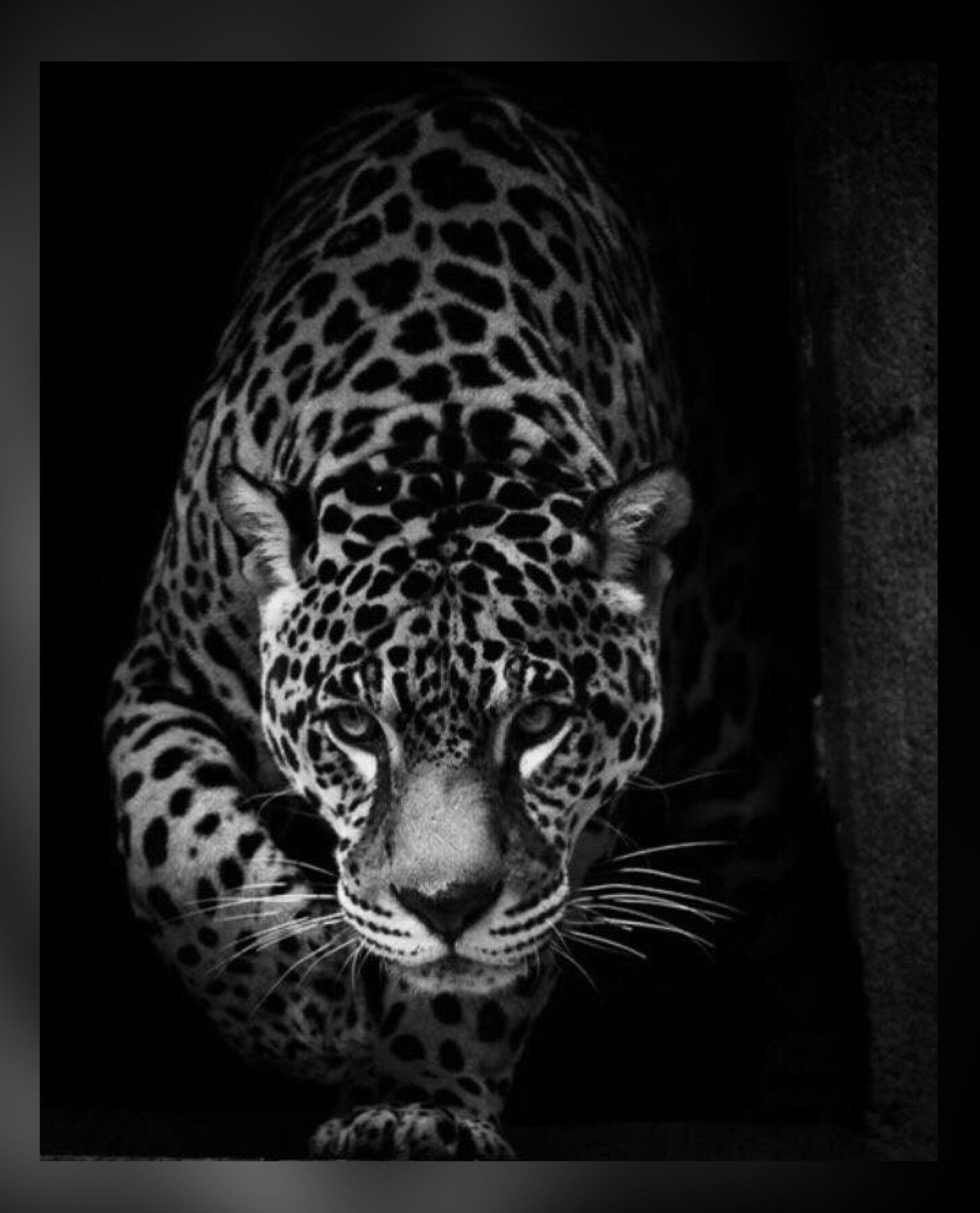 Pin By Kar3n 59 On Jehovah S Awesome Creation Black Jaguar Animal Jaguar Animal Wild Animal Wallpaper