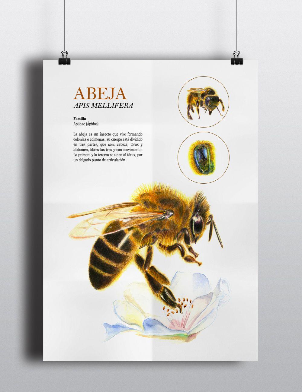 Ilustración de la anatomía de una abeja y diferentes vistas de ella ...