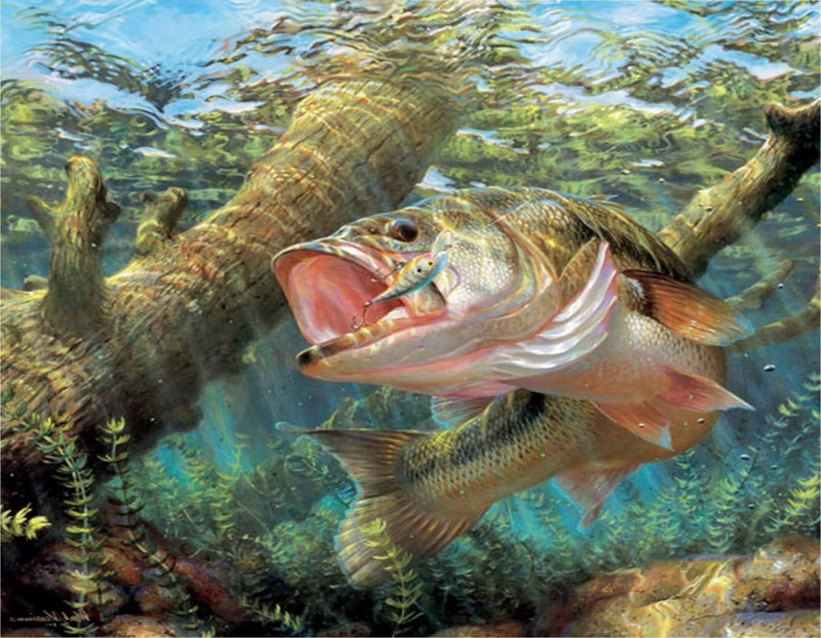 9 99 Large Mouth Bass 7 Mouse Pad Image Fabric Top Rubber Backed Ebay Electronics In 2021 Underwater Lake Fish Largemouth Bass