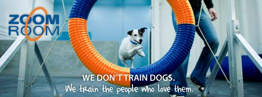 Zoom Room 3055 N Ashland Avenue Chicago Il 60657 Dog Training