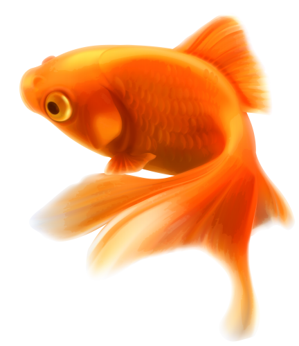 Gold Fish Png Clipart Goldfish Fish Golden Fish