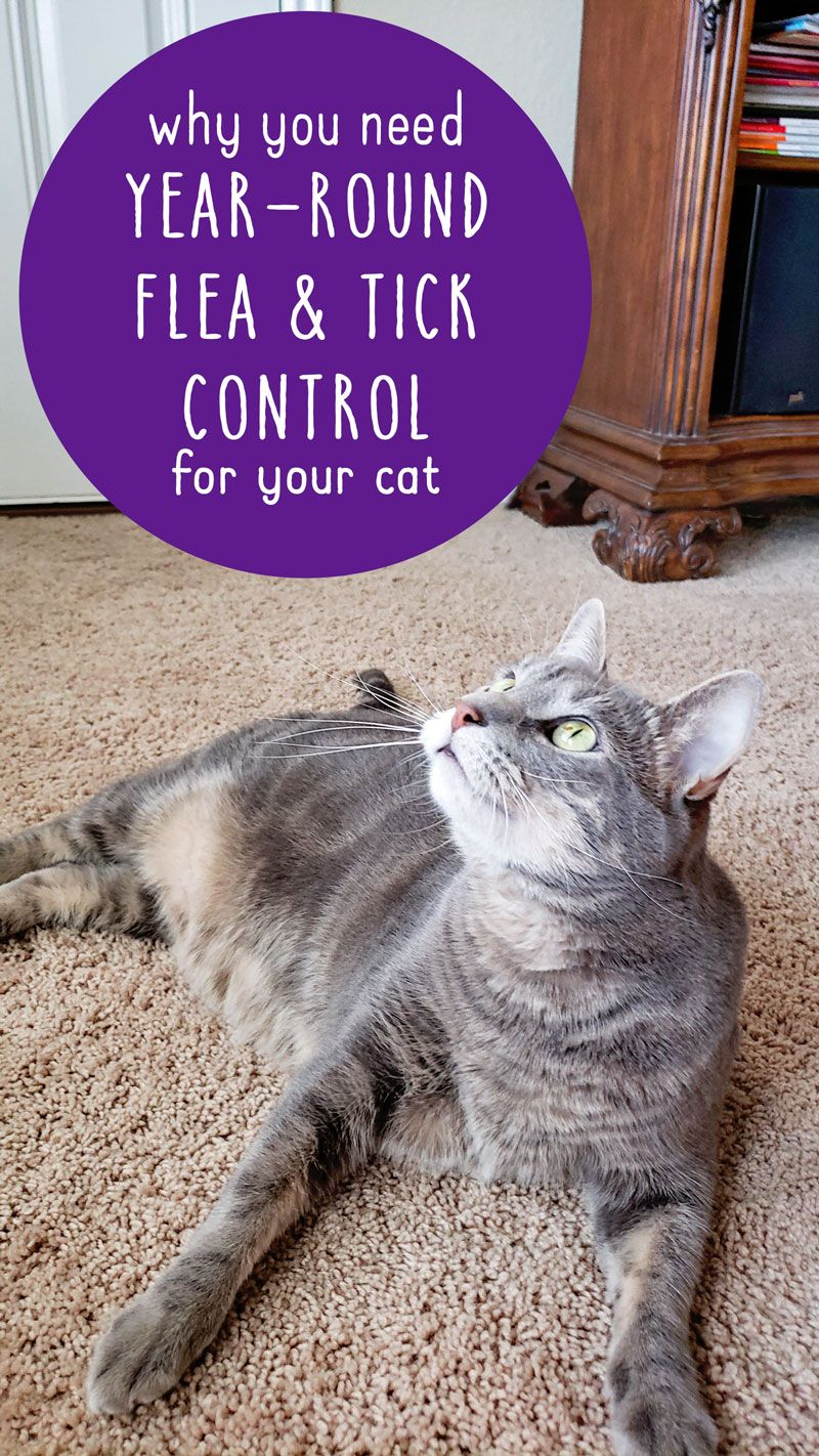 Mythbusting and why you need year round flea and tick
