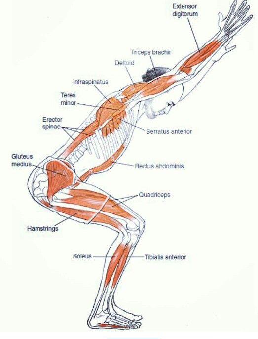 Músculos #estudio #masaje #quiromasaje #antiestres | MASAJES ...