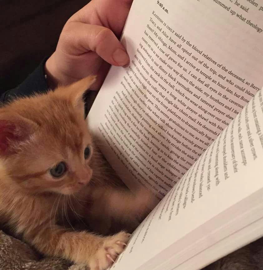 This Kitty Is Really Into His Bedtime Story Kitten Pictures Cute Cats Cute Animals