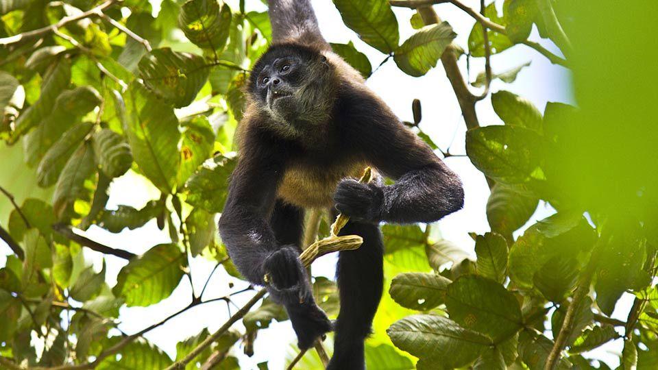 Peru jungle tour from cusco