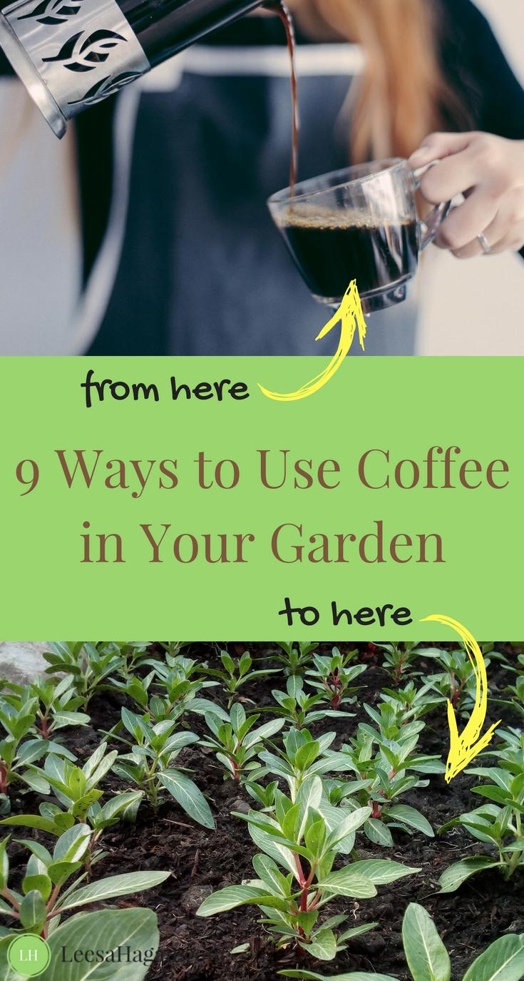 8073893056d1dfd6f9732cafa4f4e862 - Coffee Grounds Good For Vegetable Gardens