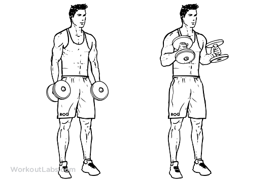 Dumbell Hammer Curls (Biceps) 2x 10 lbs 2x 15lbs | 3rd workout ...