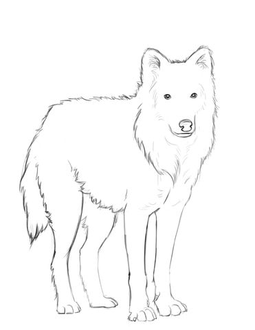 Arctic Wolf Coloring Page Wolf Colors Arctic Wolf Fox Coloring Page