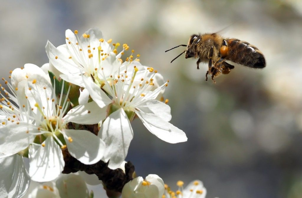 Luxury  ideas about Imker Werden on Pinterest Bienenhaltung Bienenzucht im Garten and Imkerhonig