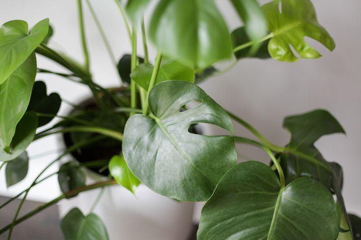 7 Amazing Low Light Plants Best Of Paisley Sparrow Low Light