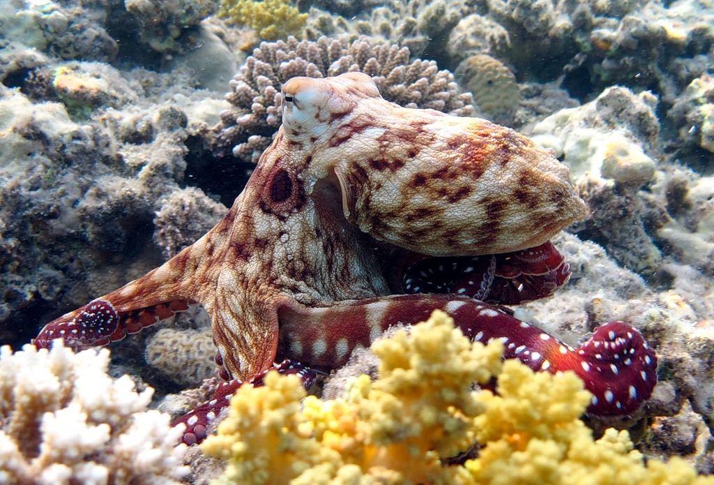 Картинка морская фауна