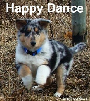 Happy Dance Talent Hounds Funny Dog Memes Happy Dance Meme Dog Memes