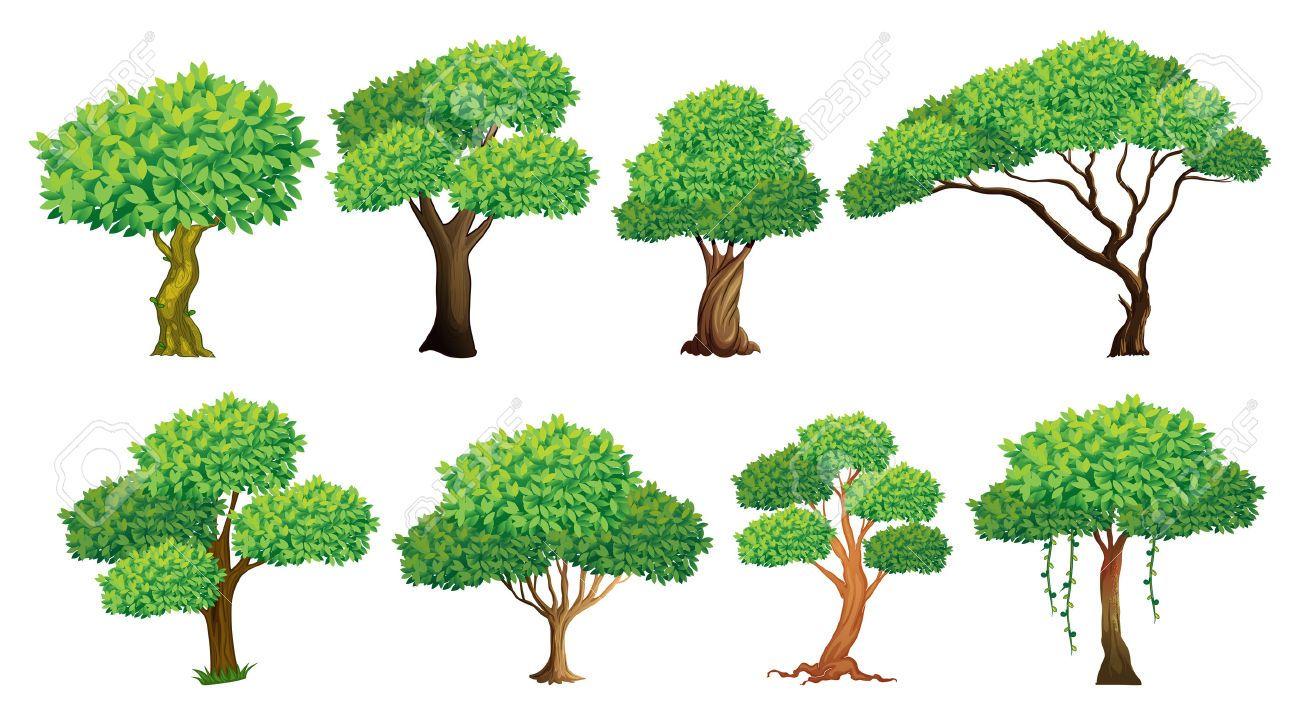 Ilustracion De Un Conjunto De Muchos Arboles Ilustracion De Arbol Ilustraciones Conjuntos