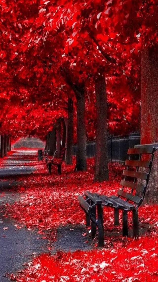 This Wallpaper Is Shared To You Via Zedge Senda Autumn Scenery Beautiful Nature Wallpaper