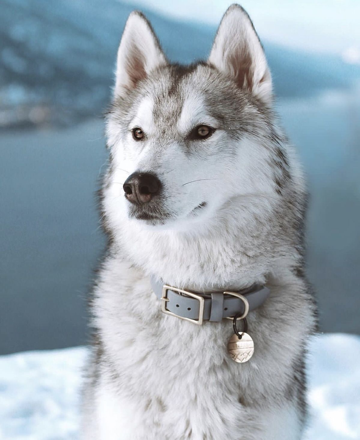 Pin By Annamaria Csoka On Dogs Siberian Husky Dog Panda Dog